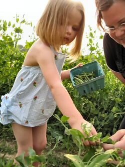 Come Pick-Your-Own peas