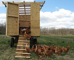 Come see the Chickens!