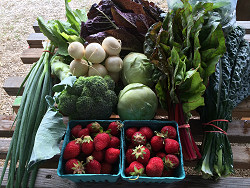 Organic, nutritious produce is here!